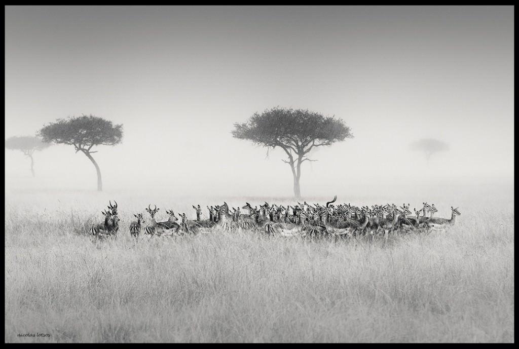 impalas-mist