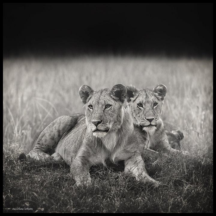 lions-den-fin