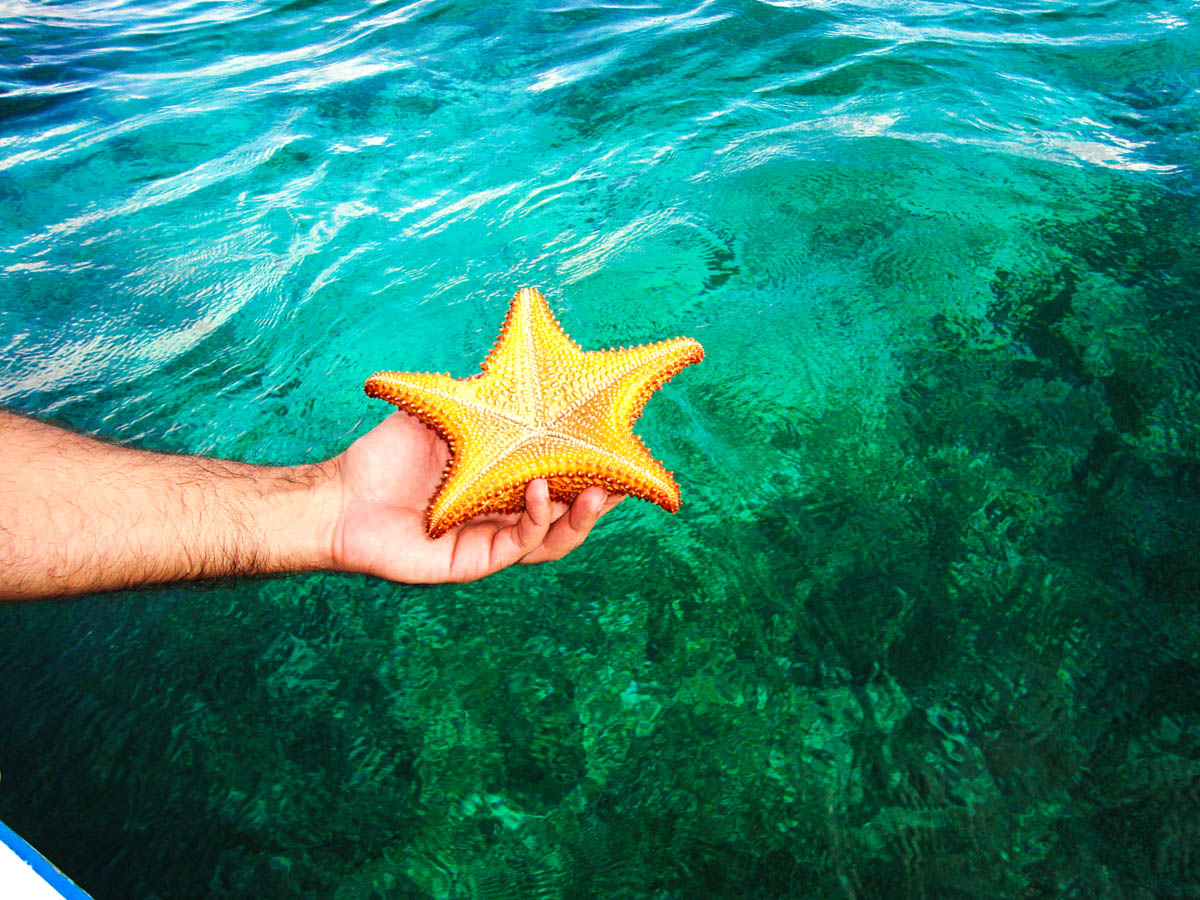 Star Fish from the reef