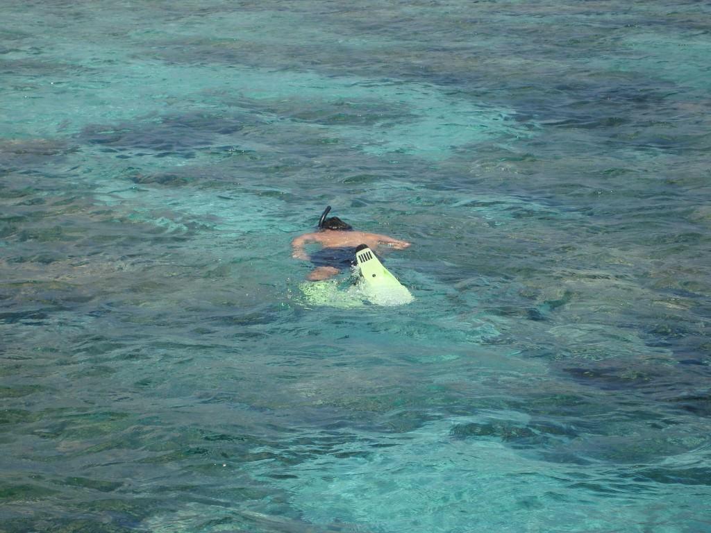 Bali Menjangan snorkeling