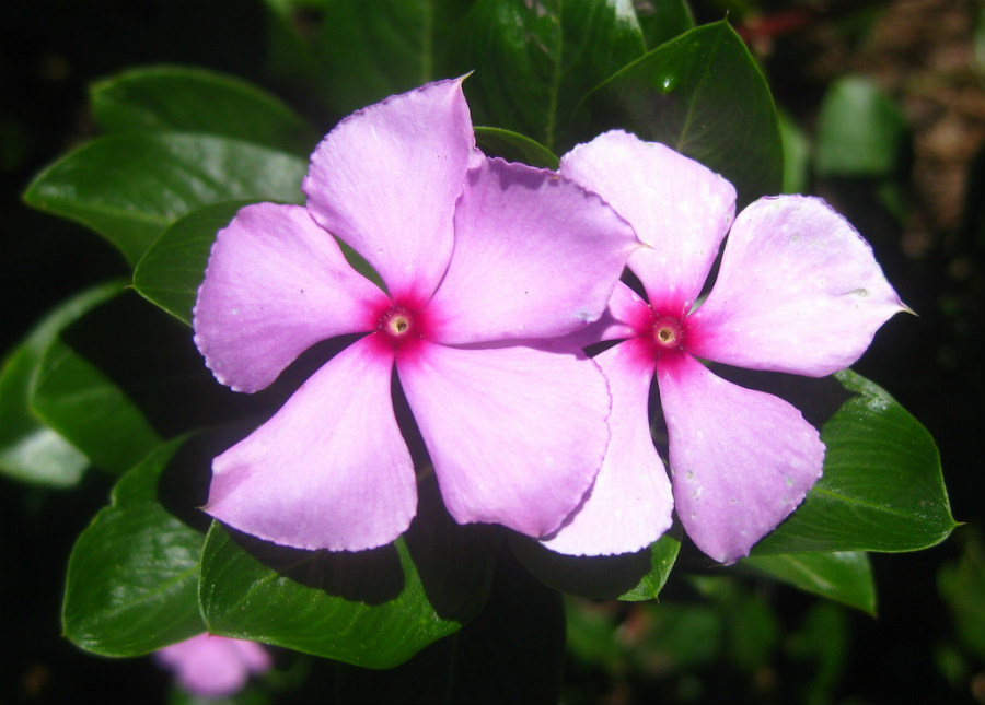 A stunning lilac periwinkle