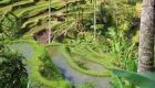 BALI_SINGAPORE_2011_08_17_0233