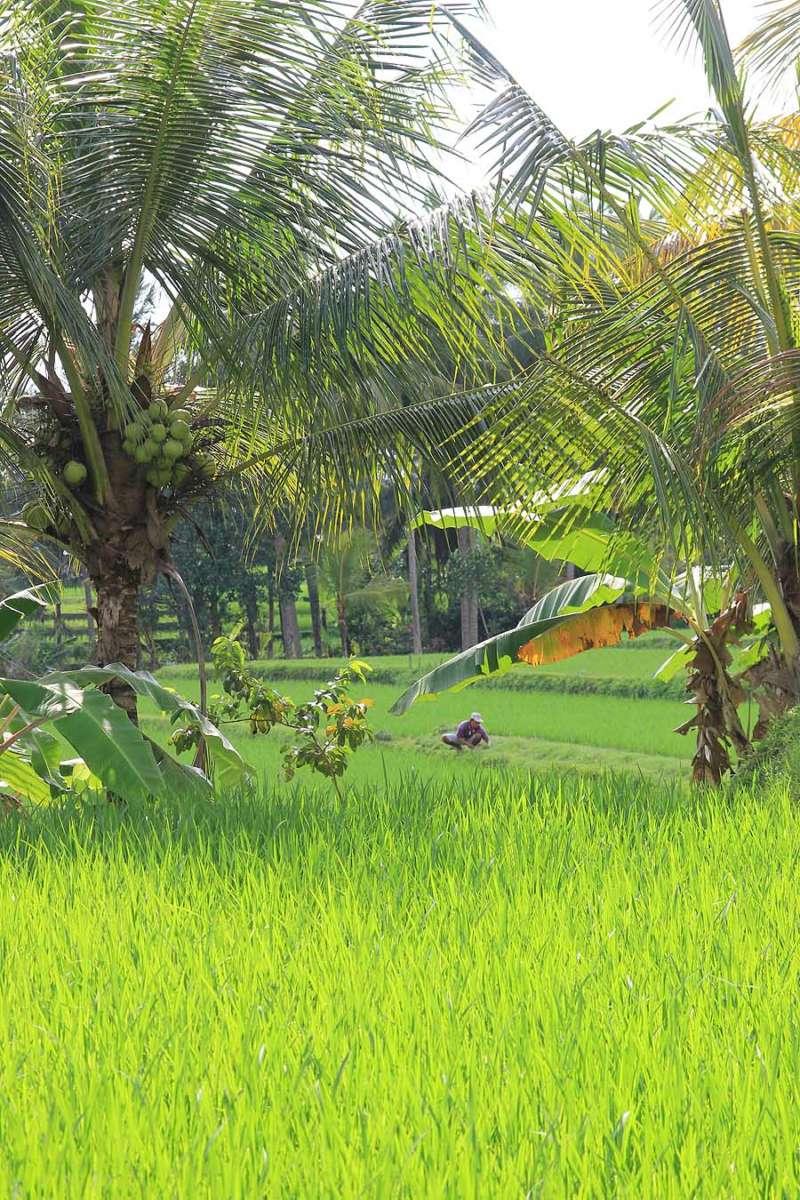 BALI_SINGAPORE_2011_08_18_0394
