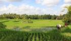 BALI_SINGAPORE_2011_08_18_0396