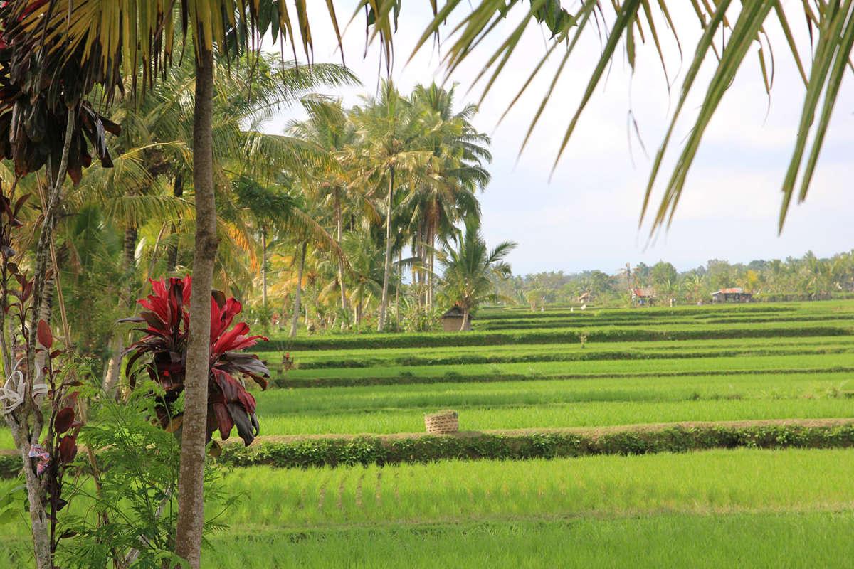 BALI_SINGAPORE_2011_08_18_0399