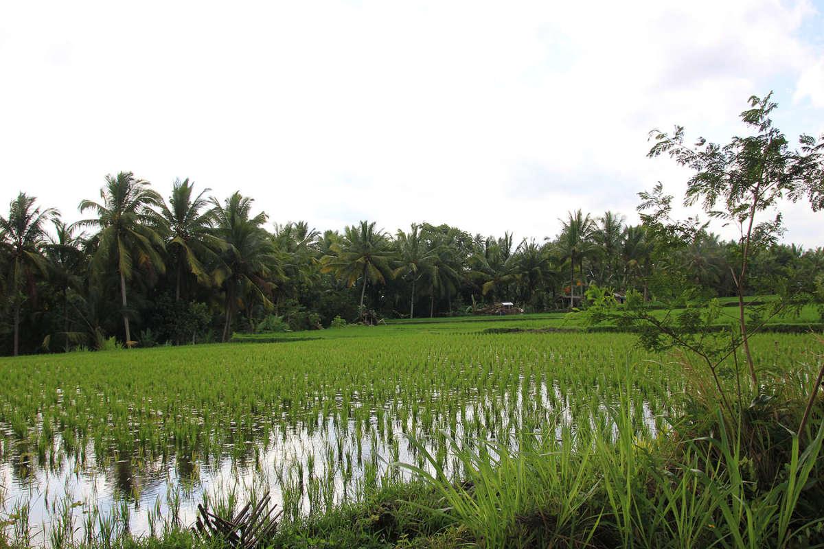 BALI_SINGAPORE_2011_08_18_0417
