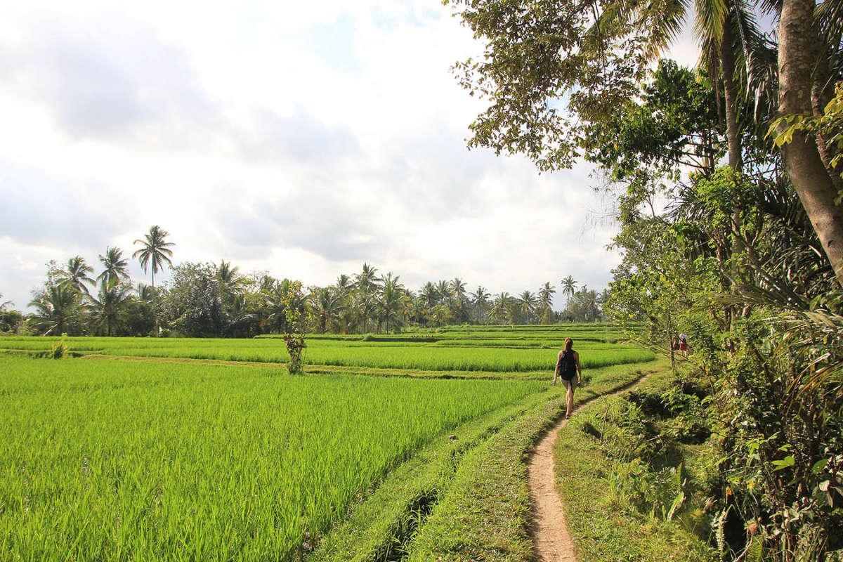 At Ubud Rice Paddies