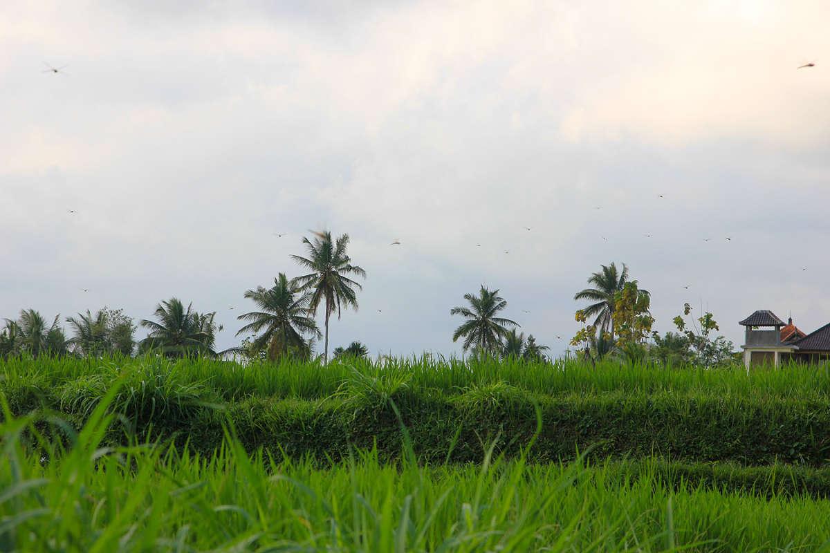 BALI_SINGAPORE_2011_08_18_0430