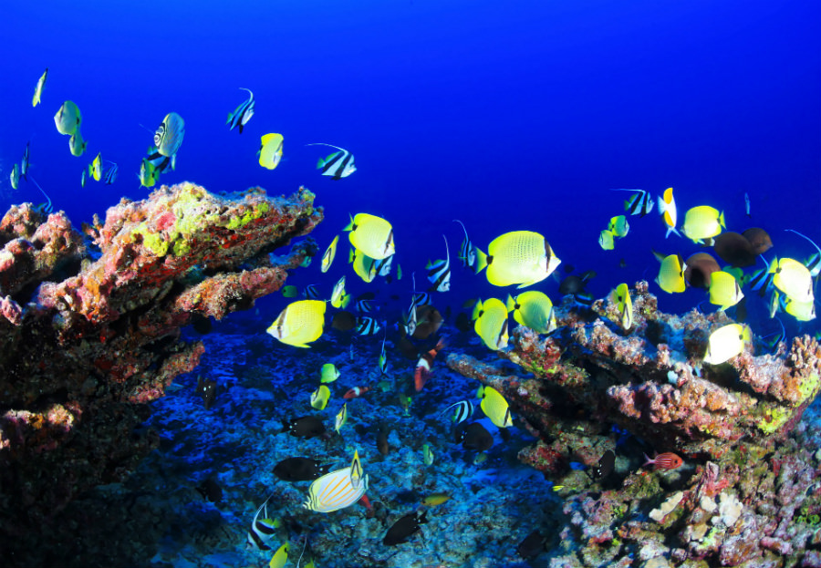 A tropic reef and its marine life